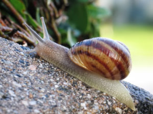 Sussex University Scientists Discover How Snails Use Two Neurons to Make Complex Decisions